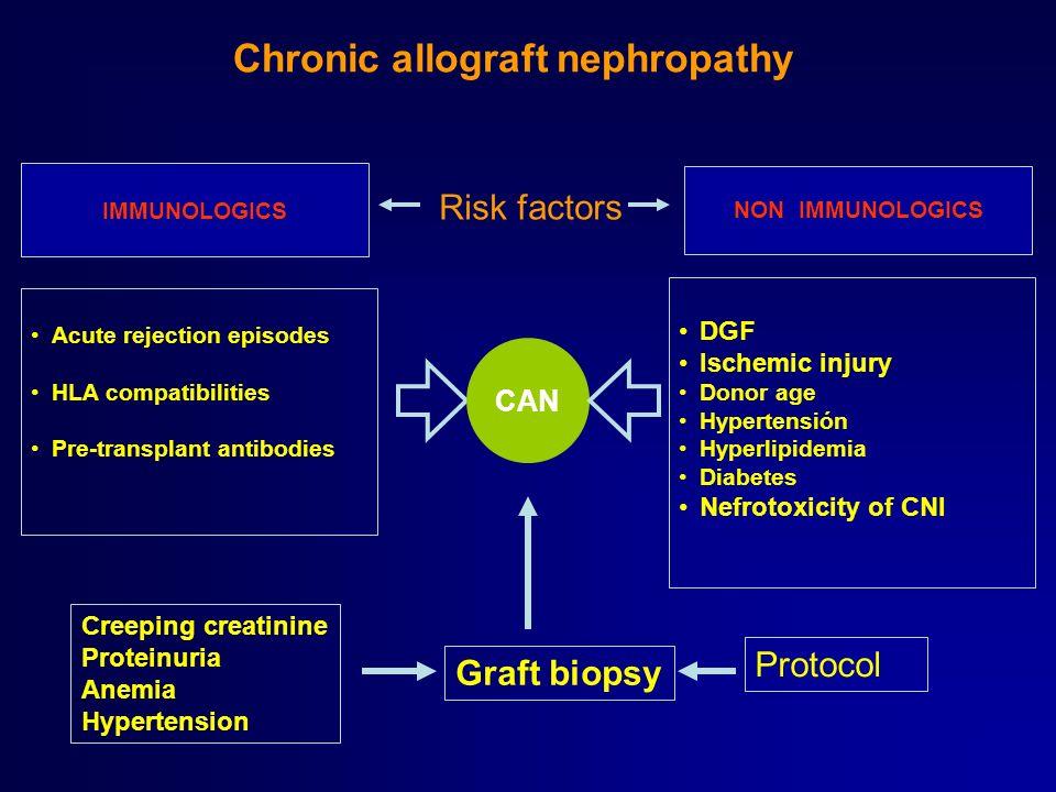 CAN Acute rejection episodes HLA compatibilities Pre-transplant antibodies DGF Ischemic injury Donor age Hypertensión Hyperlipidemia Diabetes Nefrotox
