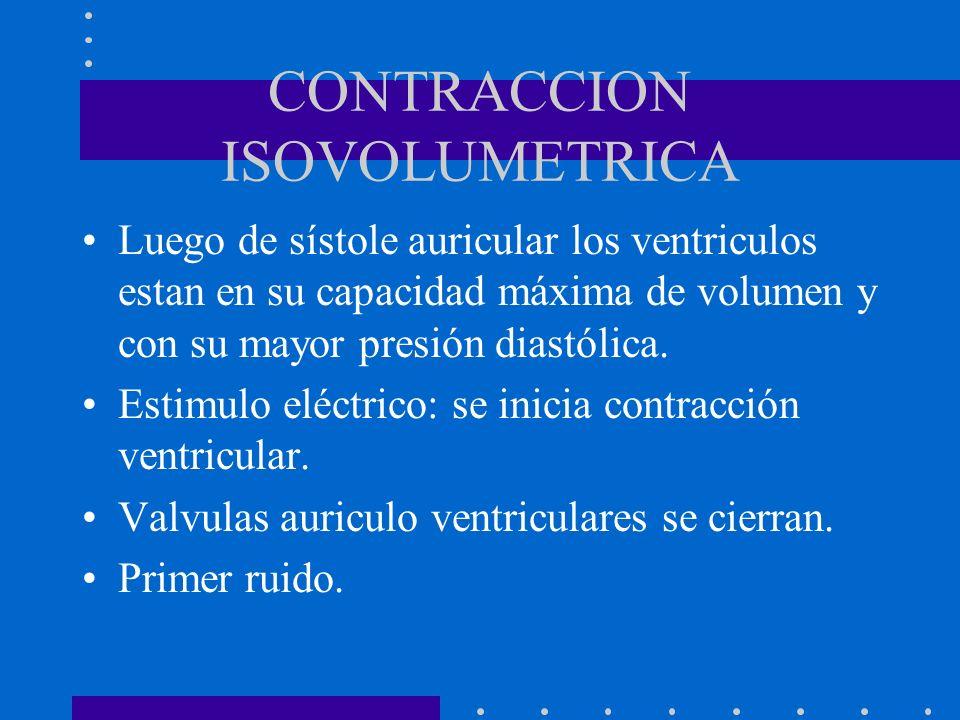CONTRACCION ISOVOLUMETRICA Luego de sístole auricular los ventriculos estan en su capacidad máxima de volumen y con su mayor presión diastólica. Estim