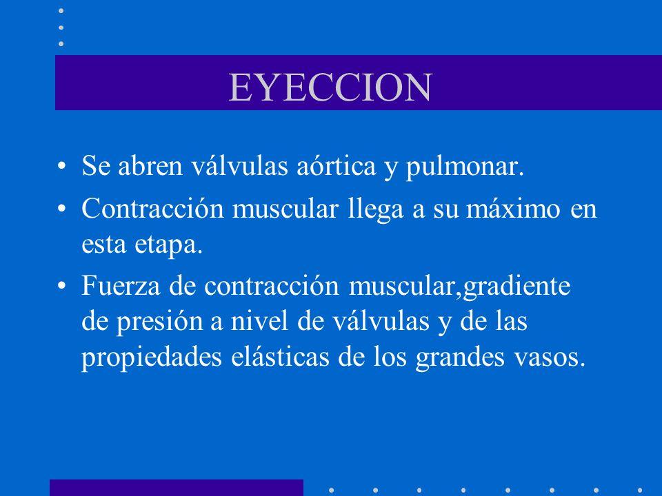 EYECCION Se abren válvulas aórtica y pulmonar. Contracción muscular llega a su máximo en esta etapa. Fuerza de contracción muscular,gradiente de presi