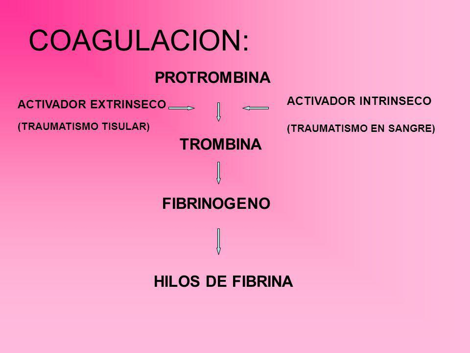 COAGULACION: PROTROMBINA TROMBINA FIBRINOGENO HILOS DE FIBRINA ACTIVADOR EXTRINSECO (TRAUMATISMO TISULAR) ACTIVADOR INTRINSECO (TRAUMATISMO EN SANGRE)
