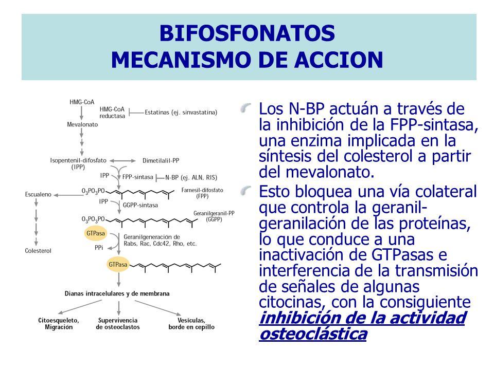 BIFOSFONATOS MECANISMO DE ACCION Los N-BP actuán a través de la inhibición de la FPP-sintasa, una enzima implicada en la síntesis del colesterol a par