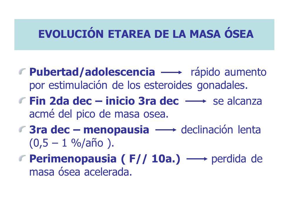 EVOLUCIÓN ETAREA DE LA MASA ÓSEA Pubertad/adolescencia rápido aumento por estimulación de los esteroides gonadales. Fin 2da dec – inicio 3ra dec se al