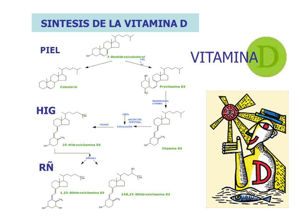 PIEL HIG RÑ VITAMINA SINTESIS DE LA VITAMINA D