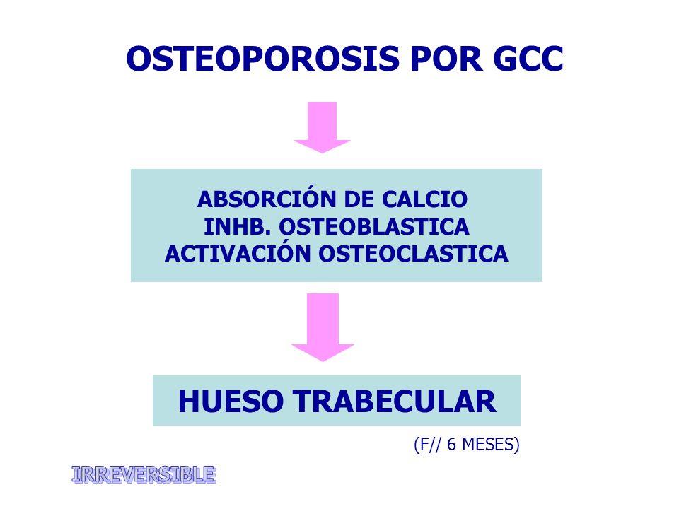 ABSORCIÓN DE CALCIO INHB. OSTEOBLASTICA ACTIVACIÓN OSTEOCLASTICA OSTEOPOROSIS POR GCC (F// 6 MESES) HUESO TRABECULAR