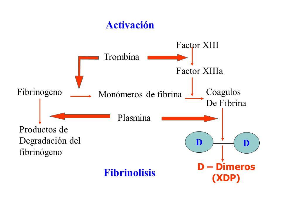 Activación Fibrinogeno Trombina Monómeros de fibrina Coagulos De Fibrina Productos de Degradación del fibrinógeno Plasmina D D D – Dimeros (XDP) Fibri