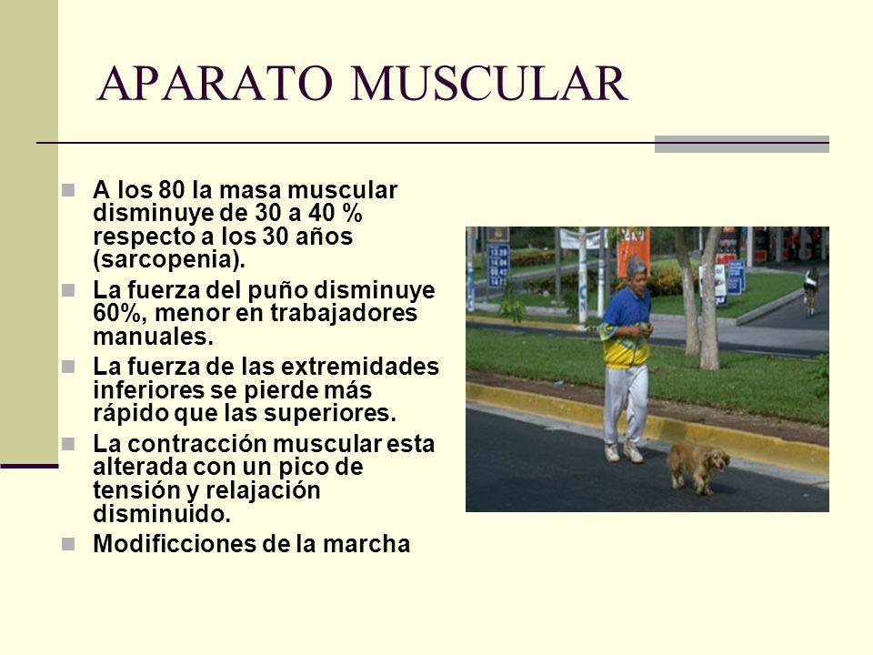 APARATO MUSCULAR A los 80 la masa muscular disminuye de 30 a 40 % respecto a los 30 años (sarcopenia). La fuerza del puño disminuye 60%, menor en trab