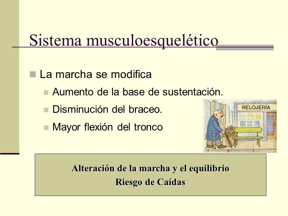 Sistema musculoesquelético La marcha se modifica Aumento de la base de sustentación. Disminución del braceo. Mayor flexión del tronco Alteración de la