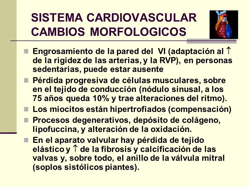 SISTEMA CARDIOVASCULAR CAMBIOS MORFOLOGICOS Engrosamiento de la pared del VI (adaptación al de la rigidez de las arterias, y la RVP), en personas sede