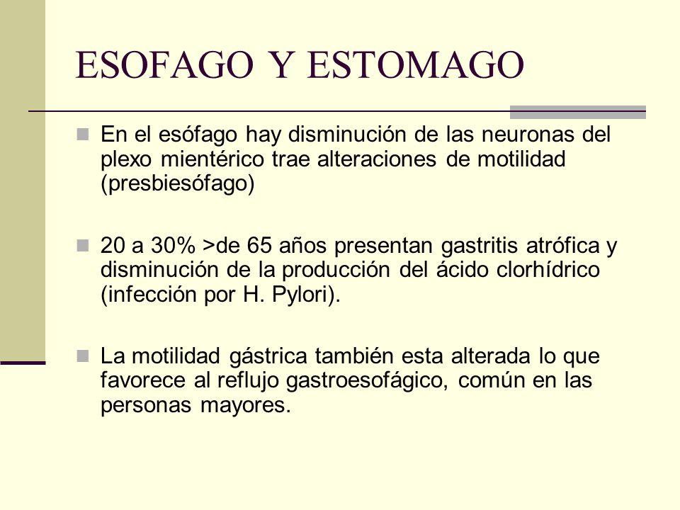 ESOFAGO Y ESTOMAGO En el esófago hay disminución de las neuronas del plexo mientérico trae alteraciones de motilidad (presbiesófago) 20 a 30% >de 65 a