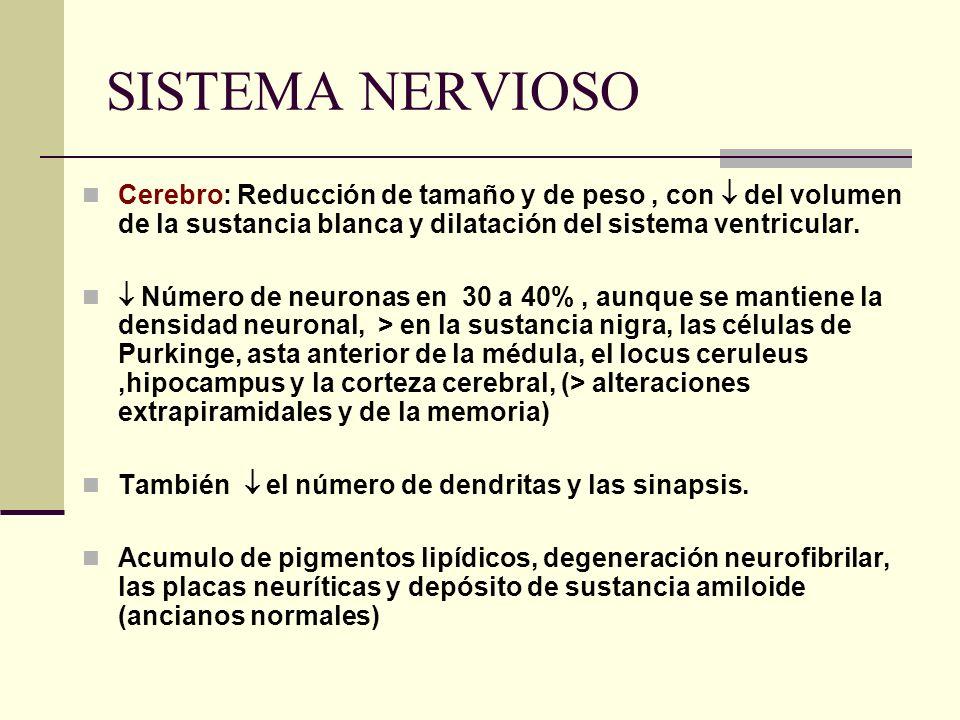 SISTEMA NERVIOSO Cerebro: Reducción de tamaño y de peso, con del volumen de la sustancia blanca y dilatación del sistema ventricular. Número de neuron