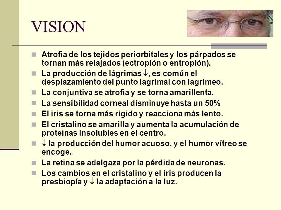 VISION Atrofia de los tejidos periorbitales y los párpados se tornan más relajados (ectropión o entropión). La producción de lágrimas, es común el des