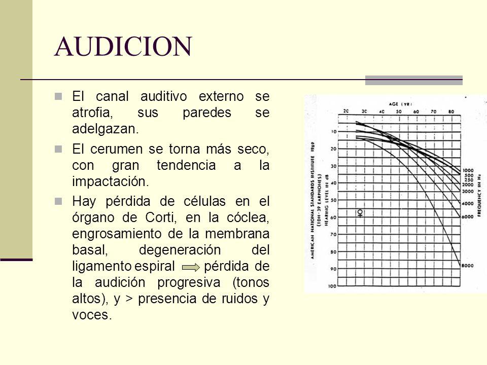 AUDICION El canal auditivo externo se atrofia, sus paredes se adelgazan. El cerumen se torna más seco, con gran tendencia a la impactación. Hay pérdid
