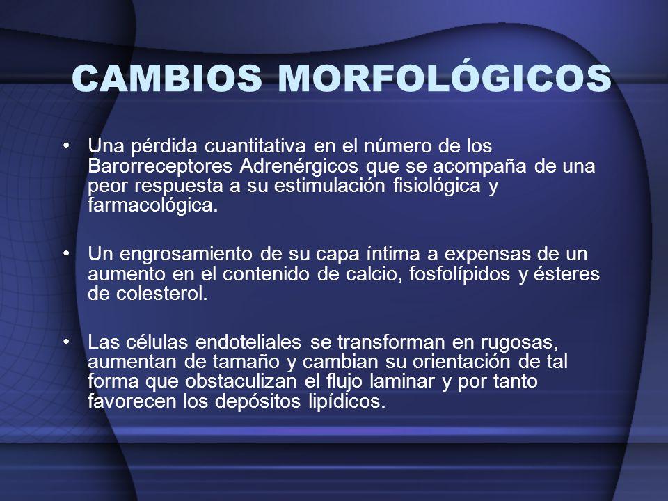 Una pérdida cuantitativa en el número de los Barorreceptores Adrenérgicos que se acompaña de una peor respuesta a su estimulación fisiológica y farmac