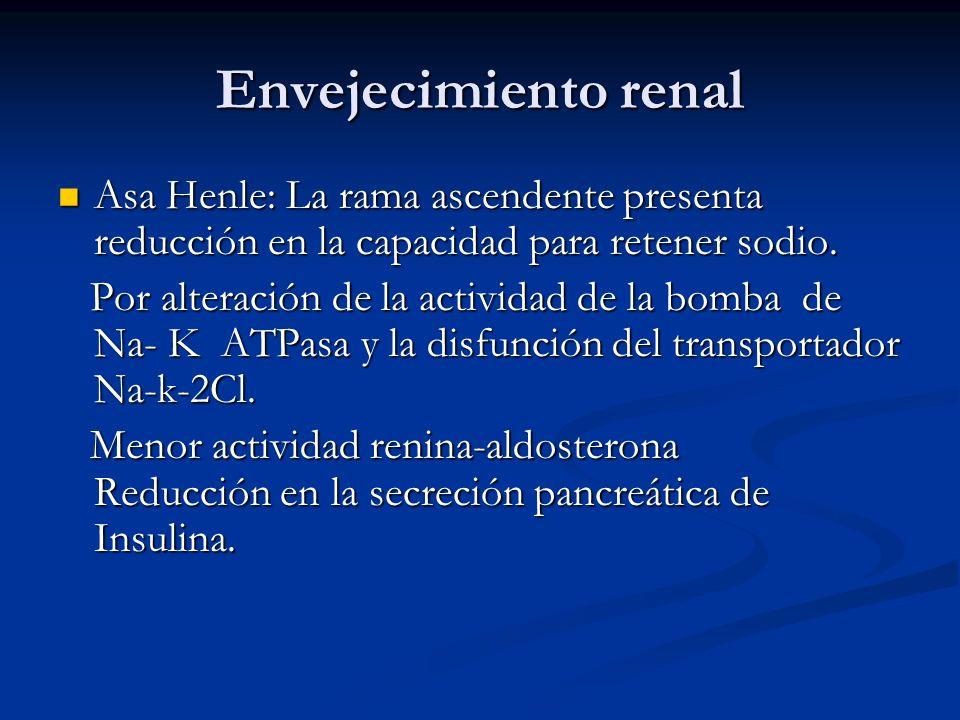 Envejecimiento renal Asa Henle: La rama ascendente presenta reducción en la capacidad para retener sodio. Asa Henle: La rama ascendente presenta reduc