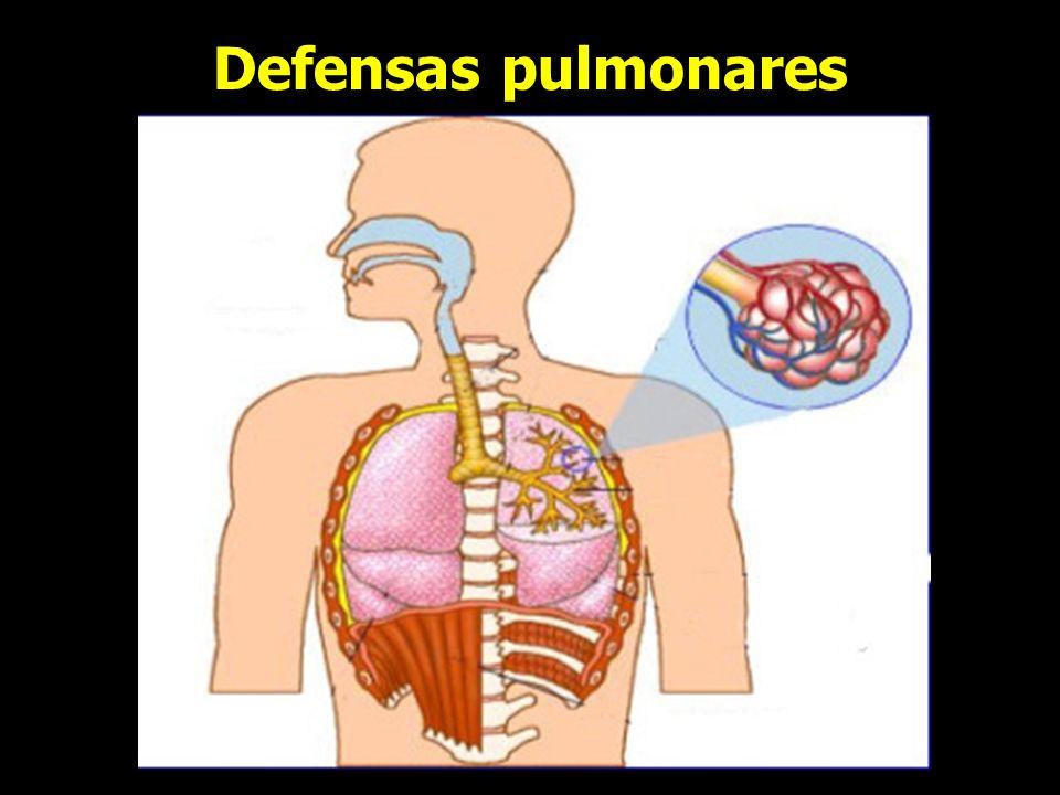 Defensas pulmonares