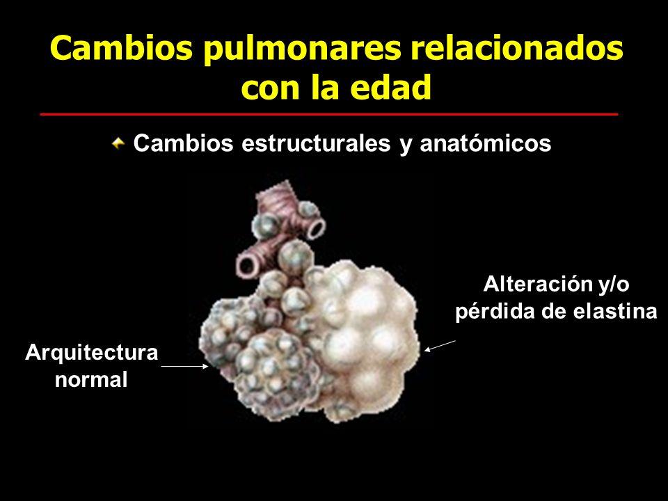 Cambios pulmonares relacionados con la edad Cambios estructurales y anatómicos Alteración y/o pérdida de elastina Arquitectura normal