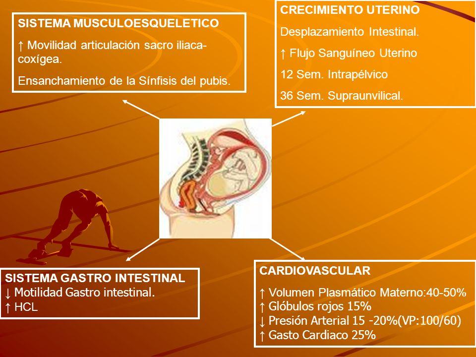 SISTEMA MUSCULOESQUELETICO Movilidad articulación sacro iliaca- coxígea. Ensanchamiento de la Sínfisis del pubis. SISTEMA GASTRO INTESTINAL Motilidad