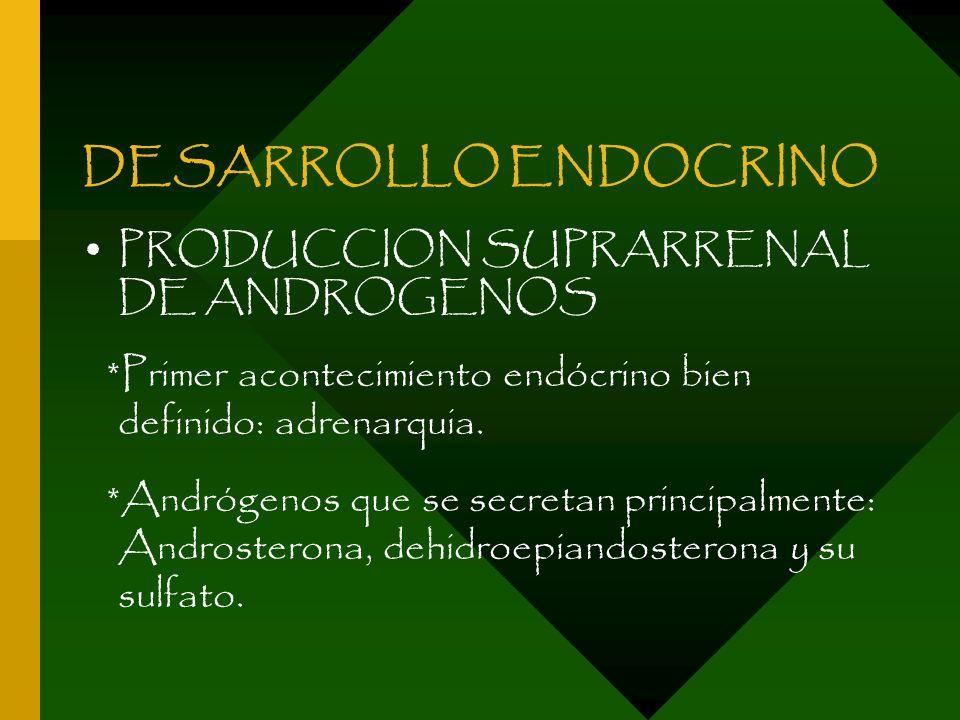 DESARROLLO ENDOCRINO PRODUCCION SUPRARRENAL DE ANDROGENOS *Primer acontecimiento endócrino bien definido: adrenarquia. *Andrógenos que se secretan pri