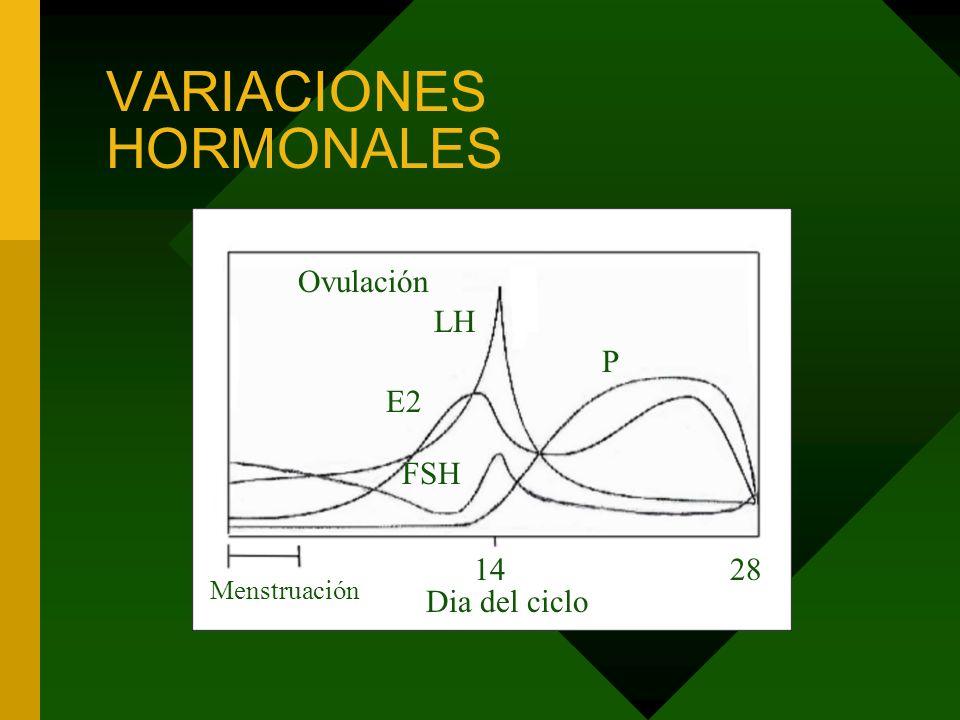Ovulación VARIACIONES HORMONALES LH E2 FSH P Dia del ciclo 1428 Menstruación