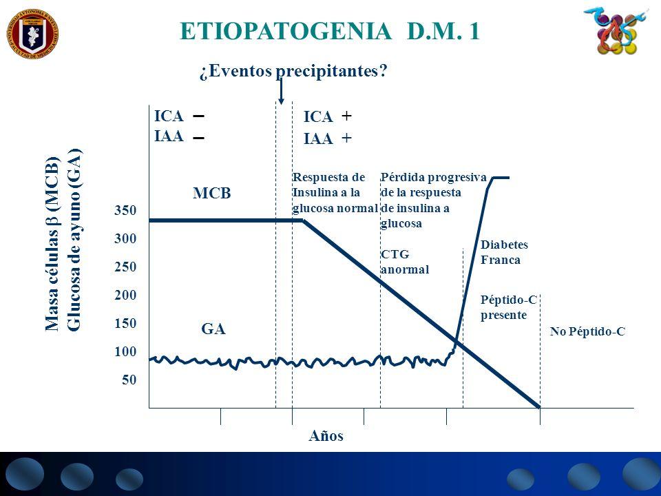 350 300 250 200 150 100 50 ICA IAA MCB GA Respuesta de Insulina a la glucosa normal Pérdida progresiva de la respuesta de insulina a glucosa Diabetes