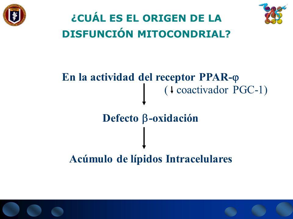 ¿CUÁL ES EL ORIGEN DE LA DISFUNCIÓN MITOCONDRIAL? En la actividad del receptor PPAR- Defecto -oxidación Acúmulo de lípidos Intracelulares ( coactivado