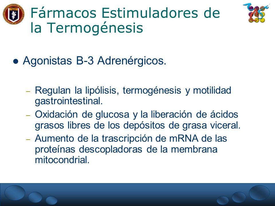 Fármacos Estimuladores de la Termogénesis Agonistas B-3 Adrenérgicos. – Regulan la lipólisis, termogénesis y motilidad gastrointestinal. – Oxidación d