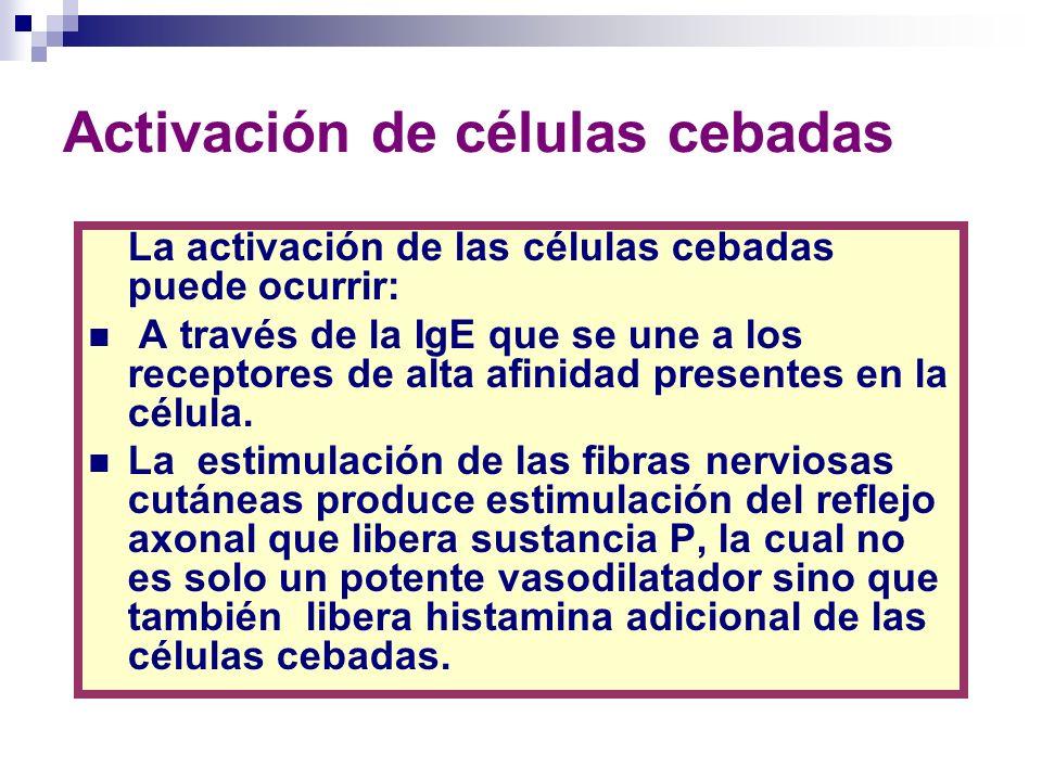 Activación de células cebadas La IgE unida a la célula dispara la producción de los metabolitos del ácido araquidónico asociado a la membrana de la célula cebada, que incluyen prostaglandina D2 a través de la acción de la enzima ciclooxigenasa (COX) y los leucotrienos C y D a través de la enzima lipooxigenasa.
