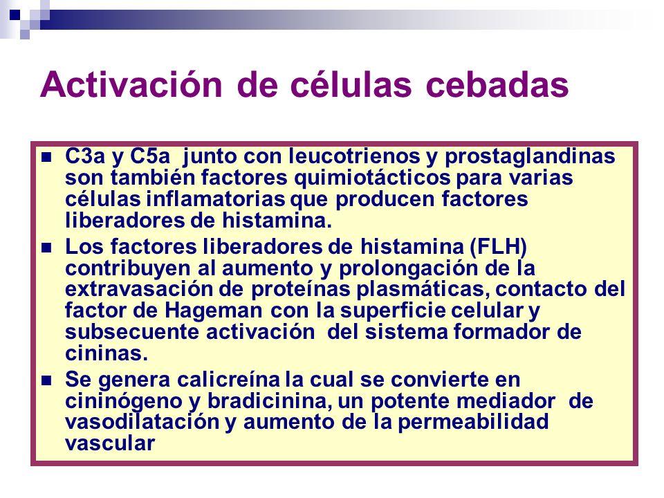 Anafilotoxinas C3a, C4a y C5a Durante la aparición del LES se activa el Mecanismo III de respuesta inmune llamado de complejos inmunes, en el cual se activa la cascada del complemento donde una serie de péptidos derivados de varias moléculas mediadoras plasmáticas, llamadas anafilotoxinas C3a,C4a, C5a y pequeños frgmentos de C2, pueden interactuar con los receptores específicos presentes en la membrana de la célula cebada o por acción de ellos mismos provocando la desgranulación de dicha célula y dejando en libertad los mediadores químicos.