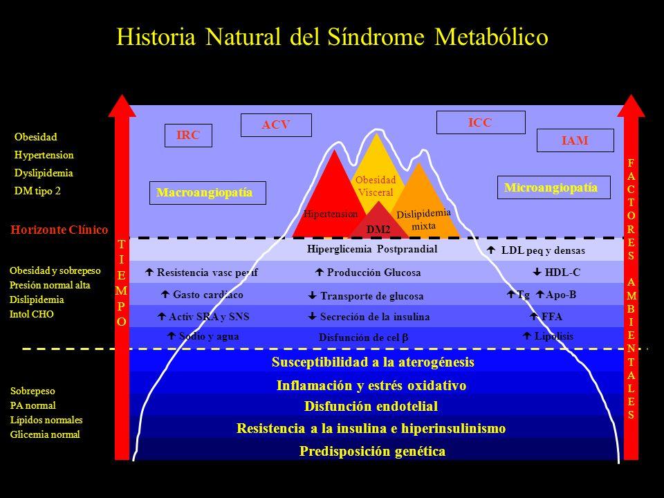 Historia Natural del Síndrome Metabólico Predisposición genética Resistencia a la insulina e hiperinsulinismo Disfunción endotelial Inflamación y estr
