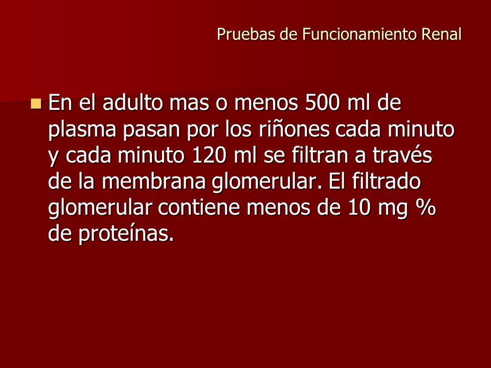 Pruebas de Funcionamiento Renal En el adulto mas o menos 500 ml de plasma pasan por los riñones cada minuto y cada minuto 120 ml se filtran a través d