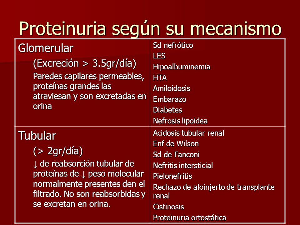Proteinuria según su mecanismo Glomerular (Excreción > 3.5gr/día) Paredes capilares permeables, proteínas grandes las atraviesan y son excretadas en o