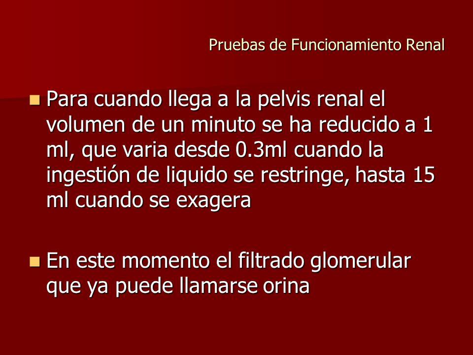Pruebas de Funcionamiento Renal Para cuando llega a la pelvis renal el volumen de un minuto se ha reducido a 1 ml, que varia desde 0.3ml cuando la ing