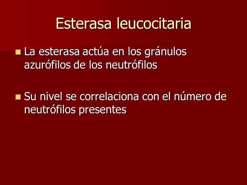Esterasa leucocitaria La esterasa actúa en los gránulos azurófilos de los neutrófilos La esterasa actúa en los gránulos azurófilos de los neutrófilos