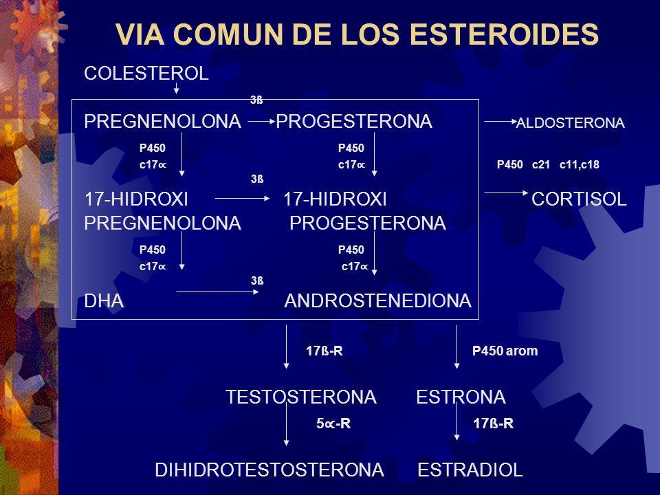 VIA COMUN DE LOS ESTEROIDES COLESTEROL 3ß PREGNENOLONA PROGESTERONA ALDOSTERONA P450 P450 c17 c17 P450 c21 c11,c18 3ß 17-HIDROXI 17-HIDROXI CORTISOL P