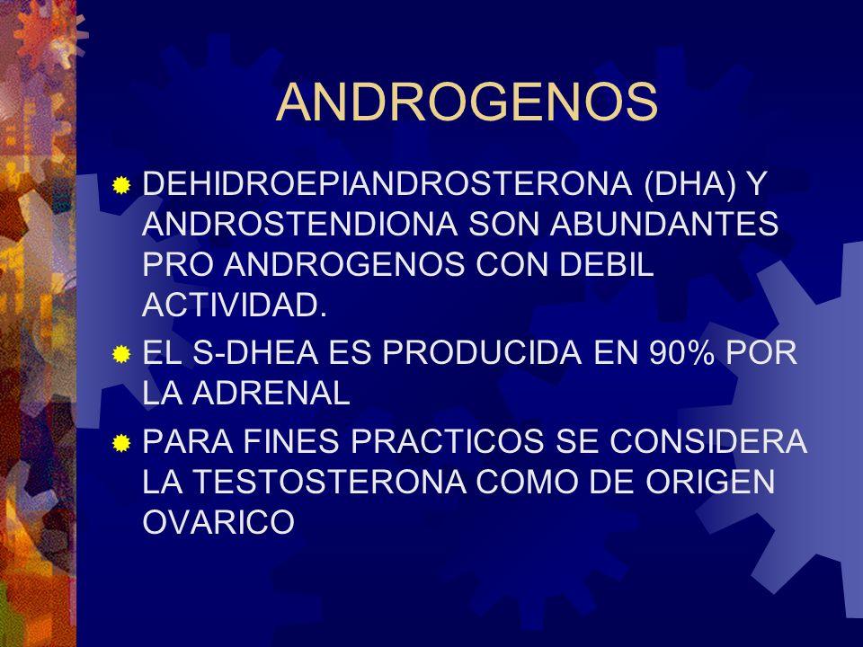 ANDROGENOS DEHIDROEPIANDROSTERONA (DHA) Y ANDROSTENDIONA SON ABUNDANTES PRO ANDROGENOS CON DEBIL ACTIVIDAD. EL S-DHEA ES PRODUCIDA EN 90% POR LA ADREN
