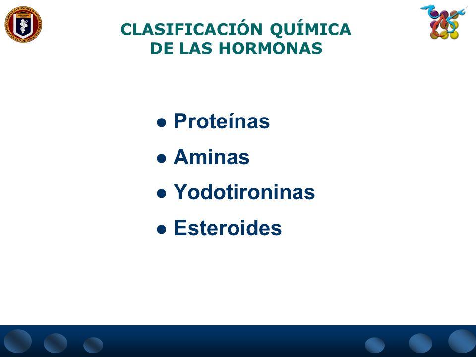 CLASIFICACIÓN QUÍMICA DE LAS HORMONAS Proteínas Aminas Yodotironinas Esteroides