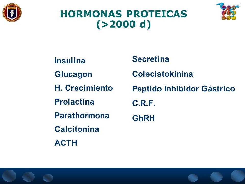 HORMONAS PROTEICAS (>2000 d) Insulina Glucagon H. Crecimiento Prolactina Parathormona Calcitonina ACTH Secretina Colecistokinina Peptido Inhibidor Gás