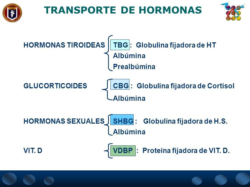 TRANSPORTE DE HORMONAS HORMONAS TIROIDEASTBG : Globulina fijadora de HT Albúmina Prealbúmina GLUCORTICOIDESCBG : Globulina fijadora de Cortisol Albúmi