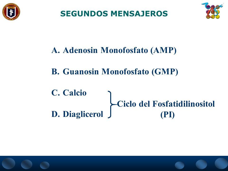 SEGUNDOS MENSAJEROS A.Adenosin Monofosfato (AMP) B.Guanosin Monofosfato (GMP) C.Calcio D.Diaglicerol Ciclo del Fosfatidilinositol (PI)