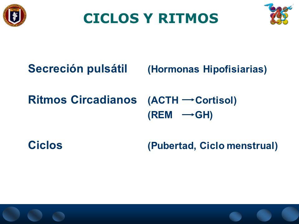 CICLOS Y RITMOS Secreción pulsátil (Hormonas Hipofisiarias) Ritmos Circadianos (ACTH Cortisol) (REM GH) Ciclos (Pubertad, Ciclo menstrual)