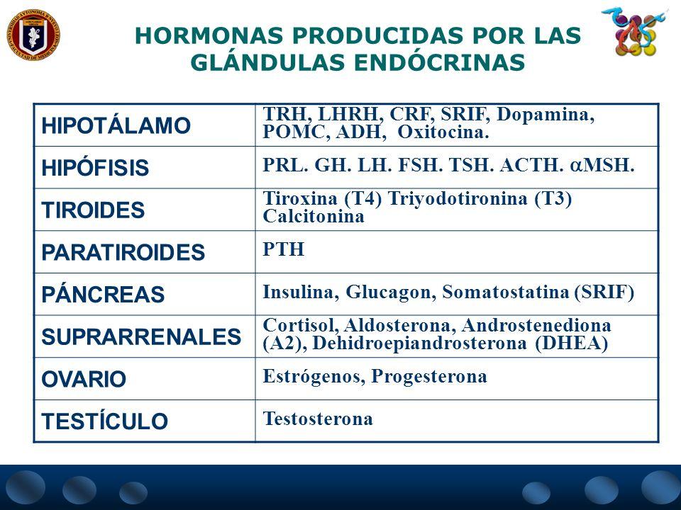 HORMONAS PRODUCIDAS POR LAS GLÁNDULAS ENDÓCRINAS HIPOTÁLAMO TRH, LHRH, CRF, SRIF, Dopamina, POMC, ADH, Oxitocina. HIPÓFISIS PRL. GH. LH. FSH. TSH. ACT