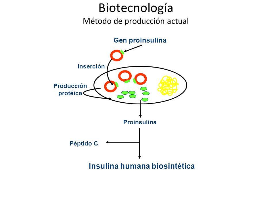 Biotecnología Método de producción actual Péptido C Gen proinsulina Proinsulina Insulina humana biosintética Inserción Producción protéica