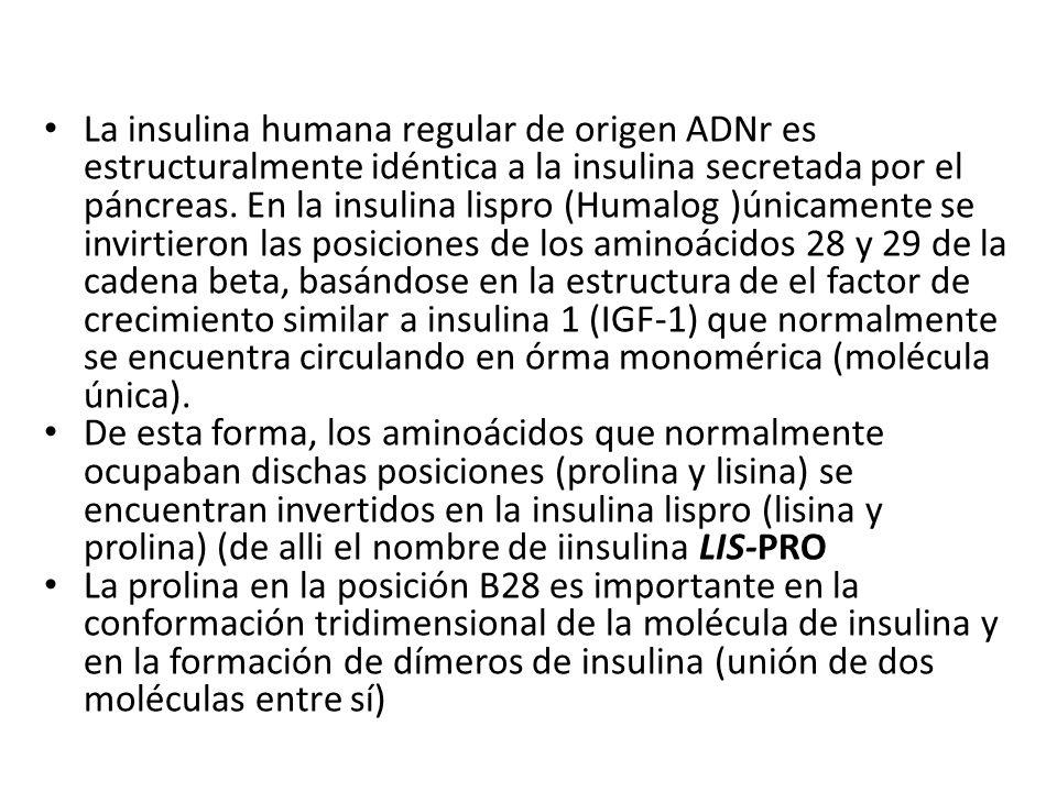 La insulina humana regular de origen ADNr es estructuralmente idéntica a la insulina secretada por el páncreas. En la insulina lispro (Humalog )únicam