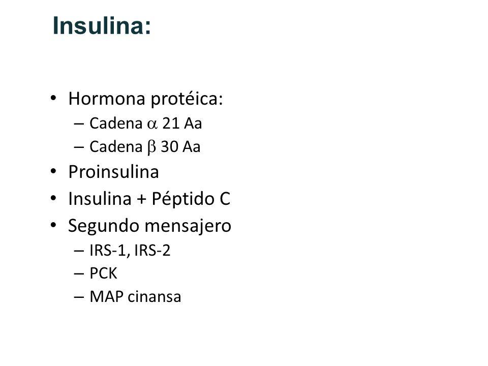 Insulina: Hormona protéica: – Cadena 21 Aa – Cadena 30 Aa Proinsulina Insulina + Péptido C Segundo mensajero – IRS-1, IRS-2 – PCK – MAP cinansa