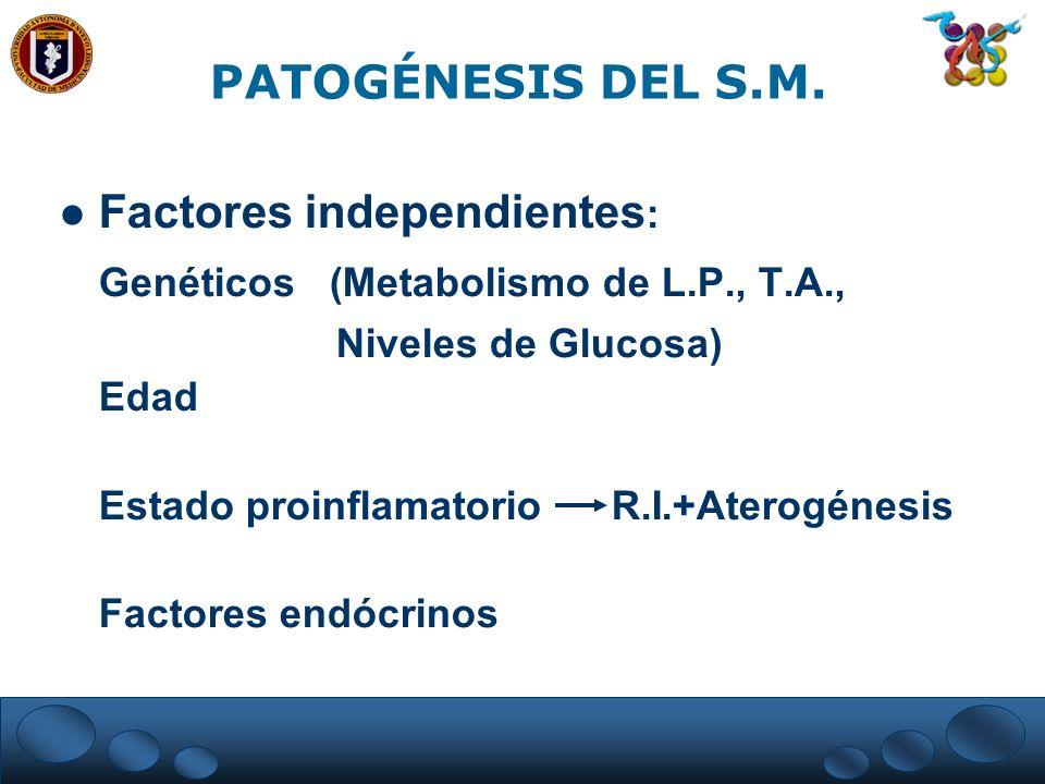 Factores independientes : Genéticos (Metabolismo de L.P., T.A., Niveles de Glucosa) Edad Estado proinflamatorio R.I.+Aterogénesis Factores endócrinos