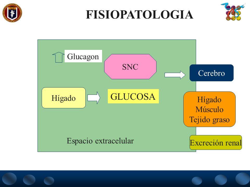 Hígado Cerebro Hígado Músculo Tejido graso Excreción renal Espacio extracelular SNC Glucagon GLUCOSA FISIOPATOLOGIA