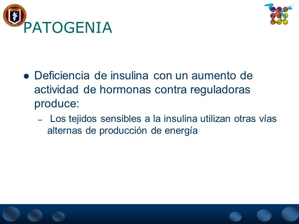 PATOGENIA Deficiencia de insulina con un aumento de actividad de hormonas contra reguladoras produce: – Los tejidos sensibles a la insulina utilizan o