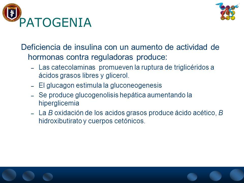 PATOGENIA Deficiencia de insulina con un aumento de actividad de hormonas contra reguladoras produce: – Las catecolaminas promueven la ruptura de trig