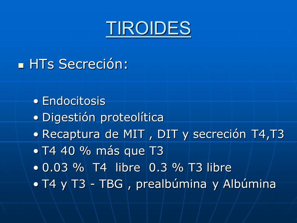TIROIDES HTs Secreción: HTs Secreción: EndocitosisEndocitosis Digestión proteolíticaDigestión proteolítica Recaptura de MIT, DIT y secreción T4,T3Reca