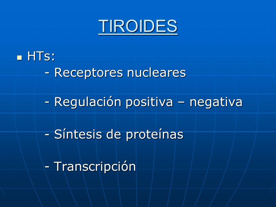TIROIDES HTs: HTs: - Receptores nucleares - Regulación positiva – negativa - Regulación positiva – negativa - Síntesis de proteínas - Transcripción